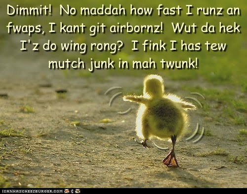 ( ( ( ( ( Dimmit! No maddah how fast I runz an fwaps, I kant git airbornz! Wut da hek I'z do wing rong? I fink I has tew mutch junk in mah twunk! ( ( (