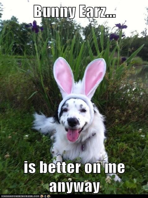 Bunny Earz...  is better on me anyway
