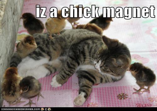 Cheezburger Image 6086068736