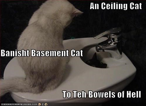 basement cat ceiling cat lolcats religions toilets - 608662272