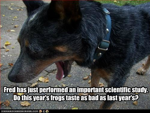 australian cattle dog dogs frog science what breed - 6087070208