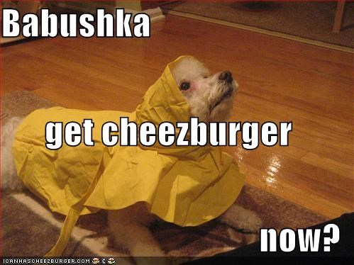 Cheezburger Image 608753408