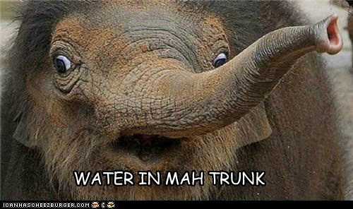 WATER IN MAH TRUNK