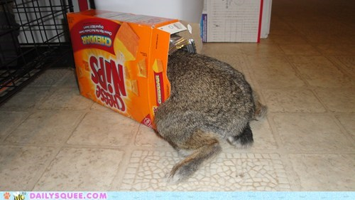 bunny,cheese nips,crackers,rabbit,reader squees,snack
