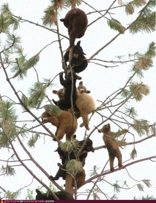 bear climbing tree wtf - 6089853440