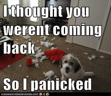 dogs panicked what breed - 6090244864