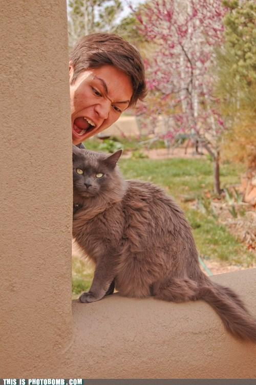 animal Animal Bomb cat pretty - 6090628096
