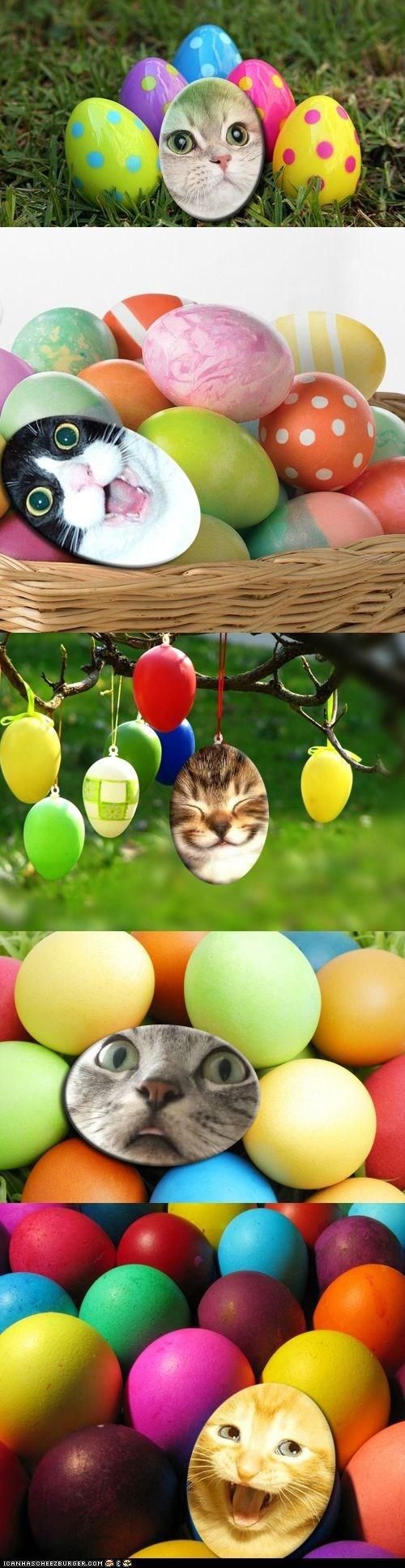 contest easter eggs ichc easter egg hunt winners - 6091009536
