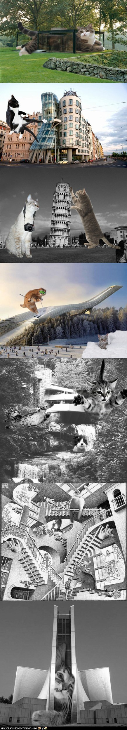 architecture buildings Cats furrocious forms photoshopped silly wtf