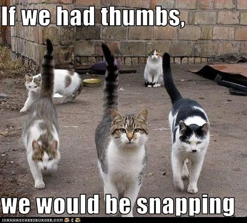 cat classic classics fingers gang lolcat snap thumbs trouble west side story - 6091378432