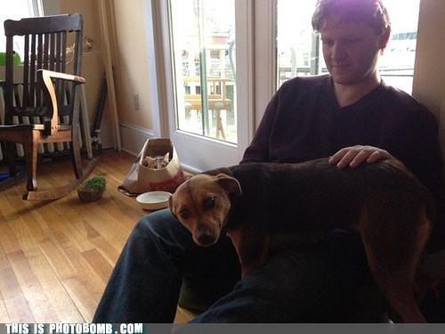 Animal Bomb animals cat dogs pet Sad - 6091543296
