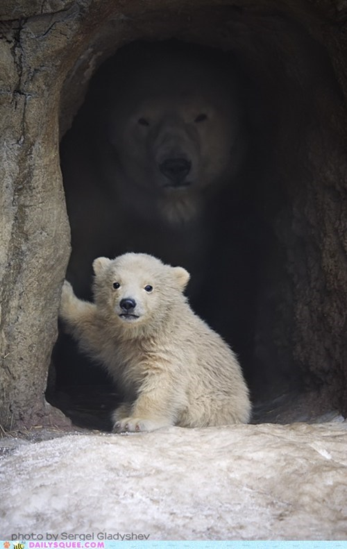 baby,cave,mom,mothers day,polar bear