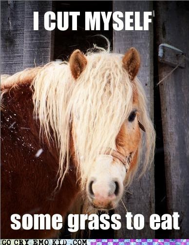 animal,emo hair,emolulz,horse