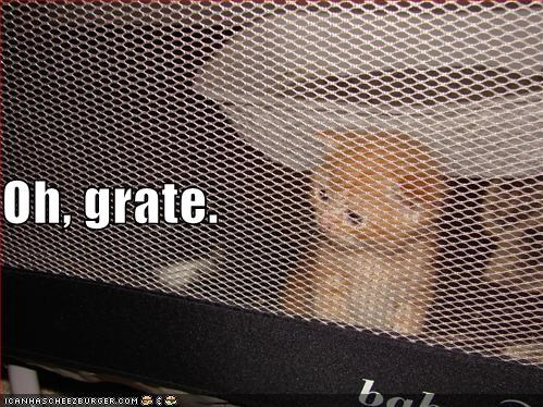 grate kitten lolcats lolkittehs orange puns - 609185024
