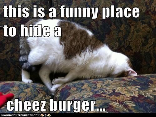 Cheezburger Image 6091862784