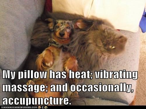 acupuncture,cat,Cats,daschund,dogs,Interspecies Love,massage,Pillow,pillows