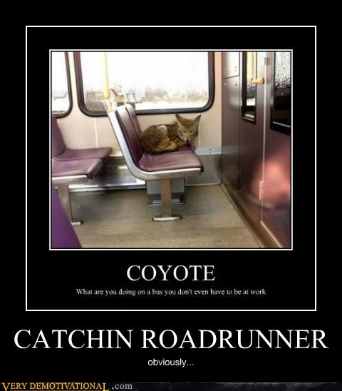 bus hilarious roadrunner wile e coyote wtf - 6092235520