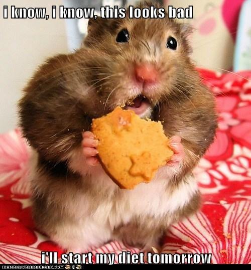 Cheezburger Image 6092730368