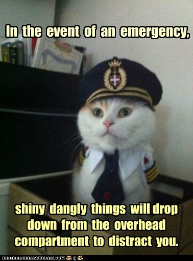 airplanes,Captain Kitteh,captains,Cats,distract,distractions,emergency,flying,Memes,pilots,shiny