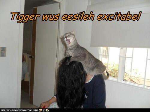 Cheezburger Image 6093078272