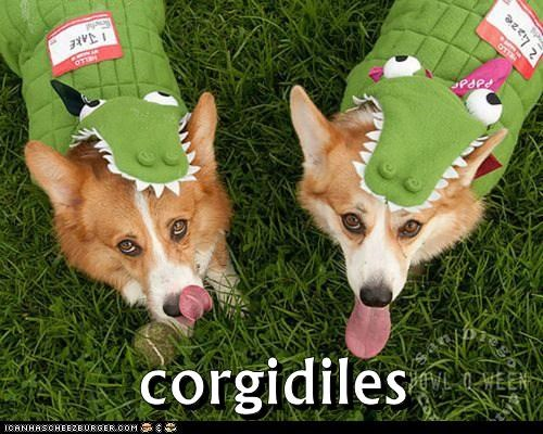 best of the week corgi corgis costume crocodile dogs Hall of Fame portmanteaus puns - 6093240576