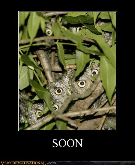 owls scary SOON Terrifying - 6093406720
