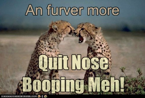 An furver more Quit Nose Booping Meh!