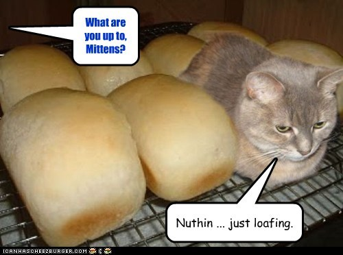bake bread cat food lolcat noms pretend pun they told me i could be anything - 6094067200