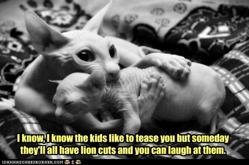 bully,cat,comfort,hair,haircut,hairless,kid,lolcat,mom,revenge,sphinx,tease