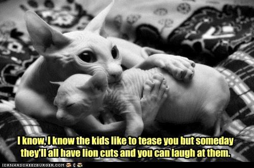 bully cat comfort hair haircut hairless kid lolcat mom revenge sphinx tease - 6094239488
