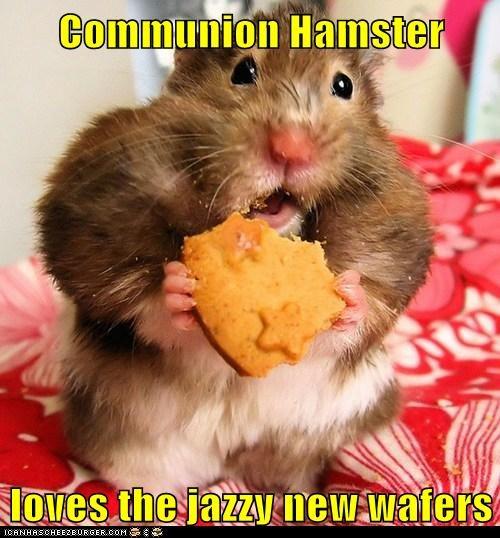 Cheezburger Image 6094464768