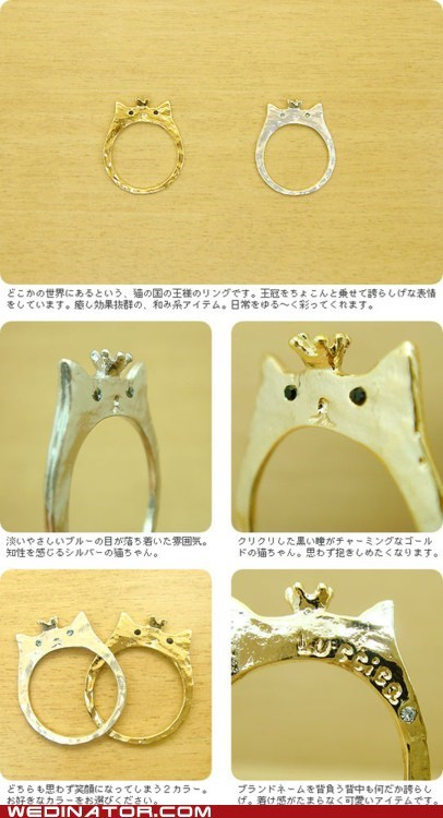 cat,funny wedding photos,Japan,ring,wedding ring