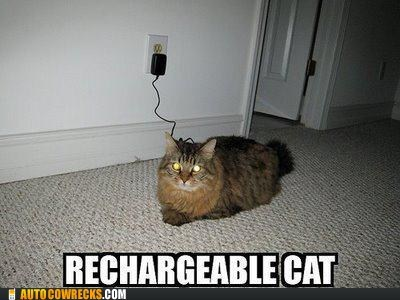 AutocoWrecks Cats g rated rechargeable cat wall chargers