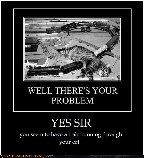 cat hilarious train wtf yes sir