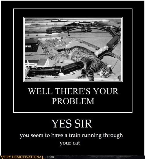 cat hilarious train wtf - 6094724352