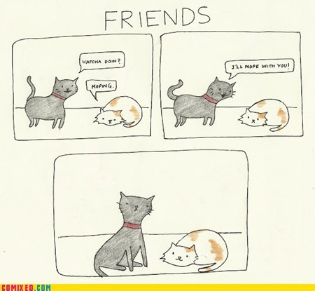 Cats friends mopey the internets - 6094868992