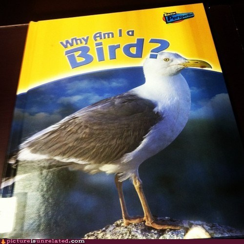 bird book philosophy wtf - 6094913024