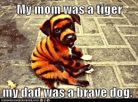My mom was a tiger my dad was a brave dog.