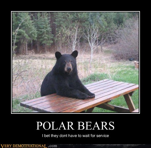 black bears hilarious polar bears racism - 6095179520