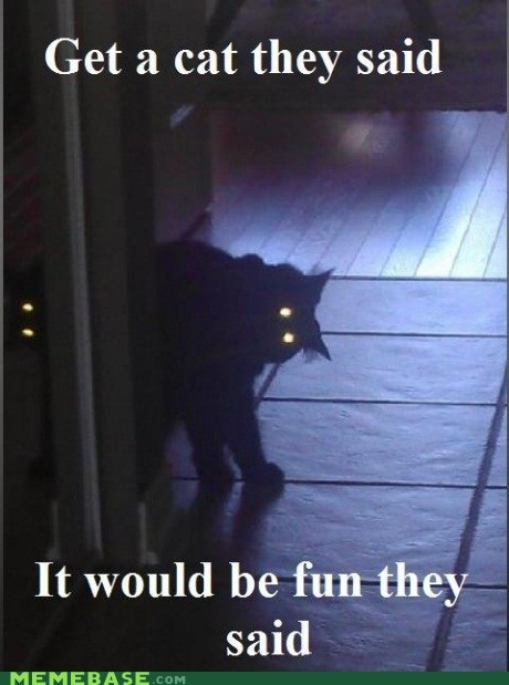 cat creepy pets They Said - 6095296512