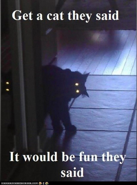 bad idea Cats creepy eyes fun laser eyes scary They Said - 6095376128