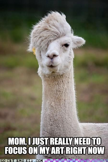 animals,best of week,emo,emolulz,llama
