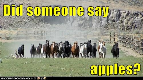 apples,excited,horses,running,stampede