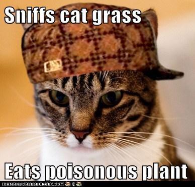 Scumbag Cat - 6095921152