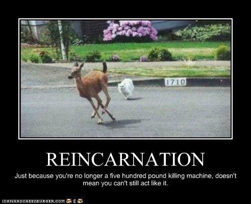 REINCARNATION Just because you're no longer a five hundred pound killing machine, doesn't mean you can't still act like it.