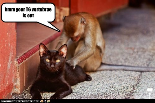 back chiropractor fix health lolcat massage monkey ouch pain - 6096175616