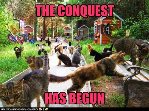 cat conquest domination evil lolcat mwahaha takeover world