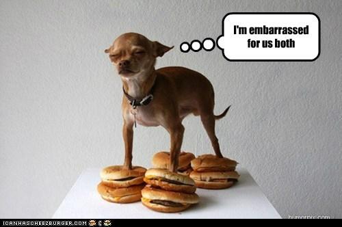 Cheezburger Image 6096865280