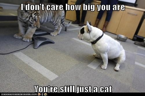 I don't care how big you are You're still just a cat