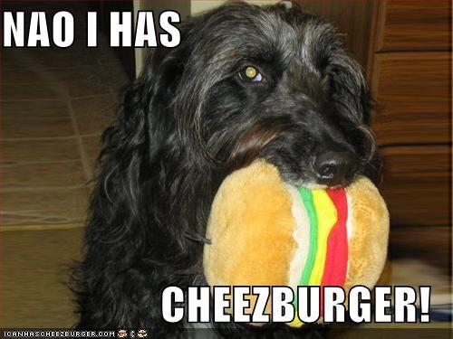 Cheezburger Image 609700096